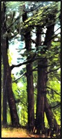 Trees, a landscape painting by Juglaris